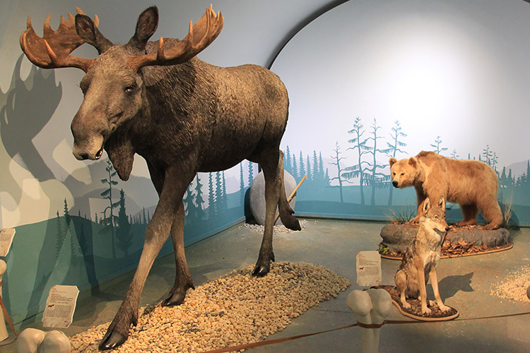 3D-Ausstattungen für Museen, 3D-Wanderausstellungen, Replikate,Skulpturen, Figuren