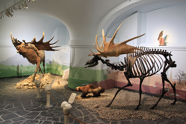 Museum, 3D-Druck Wissenschaft und Forschung, Museum